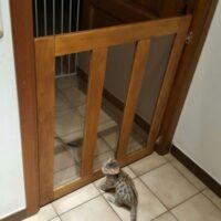 Maatwerk deurpaneel in deuropening, serre, trap, ….